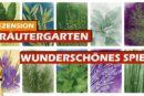 ► Kräutergarten / Golden-Geek-Nominierung / Rezension / Kartenspiel